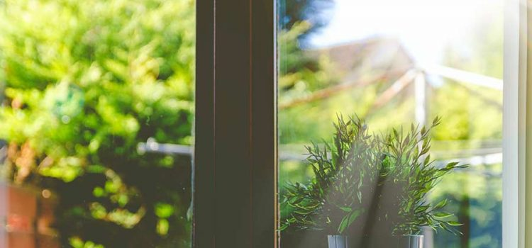 sun shining through a window with a house plant